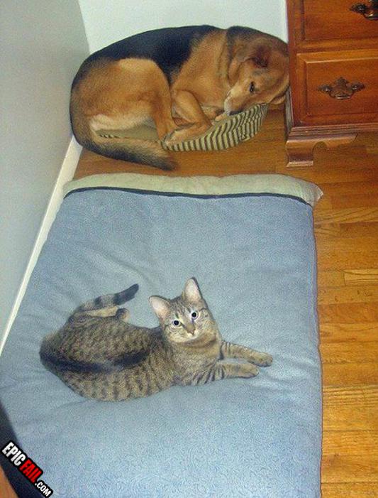 stellissimo bullismo cane e gatto